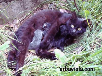 La gatta Minù con i cucciolini appena nati