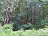 bosco fitto