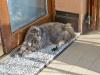 Kiki in cerca di ombra