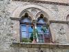 San Gimignano, bifora con tentativo di rosa rampicante