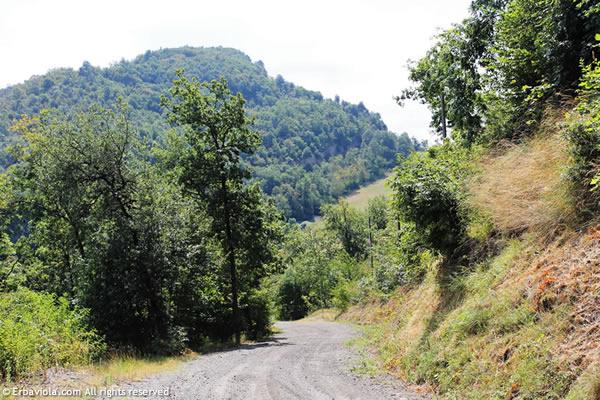 Monte Rosso Livergnano - erbaviola.com