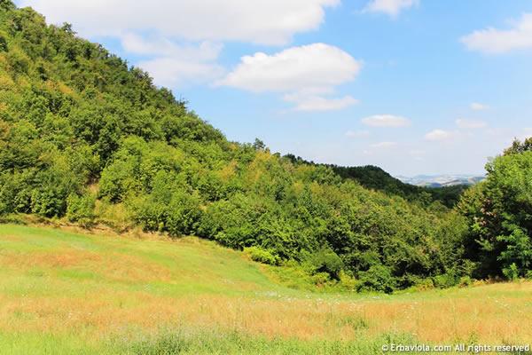 riserva naturale appennino Monte Rosso - erbaviola.com