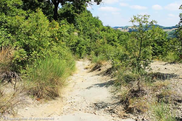 Sentiero attorno a Monte Rosso Livergnano - erbaviola.com