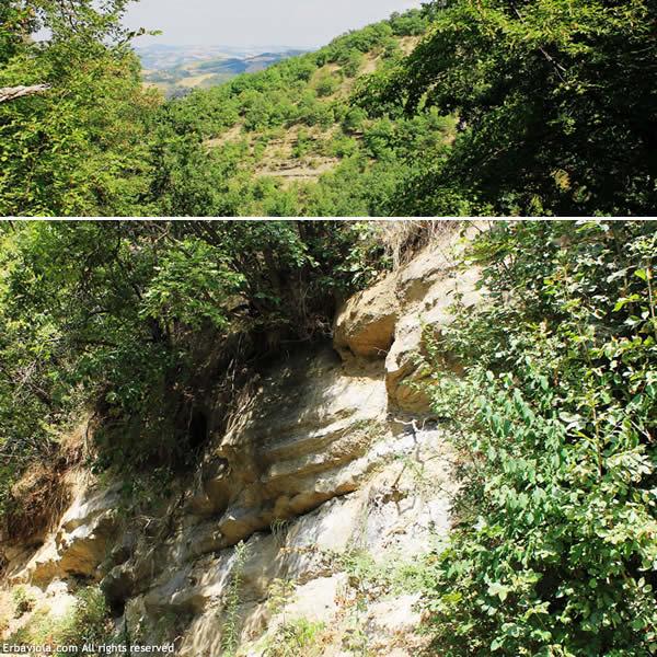 Riserva Naturale Contrafforte Pliocenico - erbaviola.com