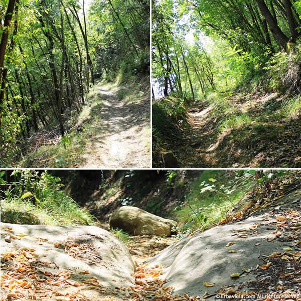 sentieri nel bosco - erbaviola.com