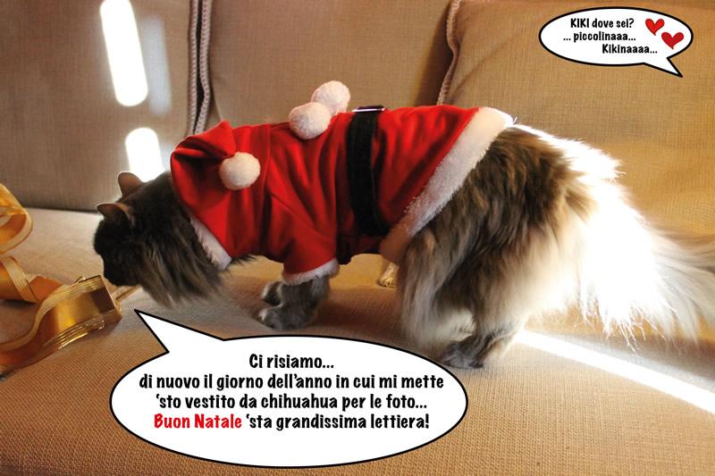 auguri di buone feste da erbaviola e dalla gattina Kiki che si lamenta perché la vestono da Babbo Natale