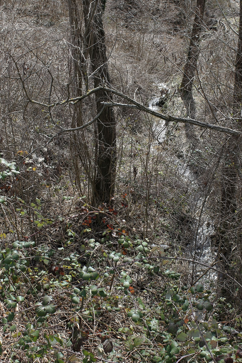 il bosco riprende vita