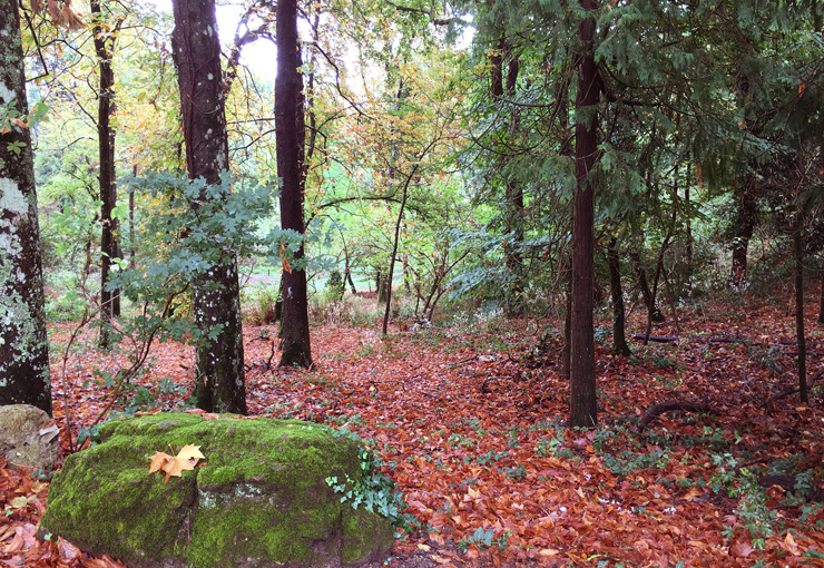bosco con foglie cadute che formano un manto rosso