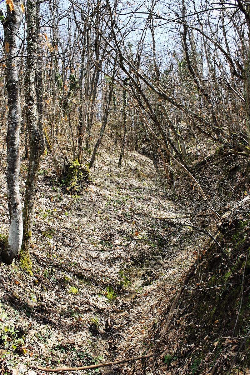 ruscello in secca nel bosco