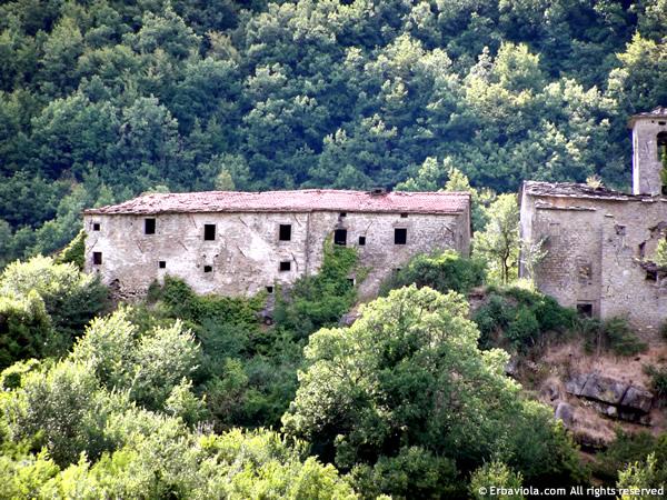 La dogana di Castiglioncello oggi - erbaviola.com