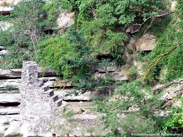 Spalle del ponte mai terminato Castiglioncello - erbaviola.com