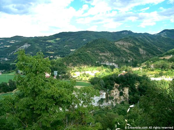Strada per Castiglioncello di Moranduccio - erbaviola.com
