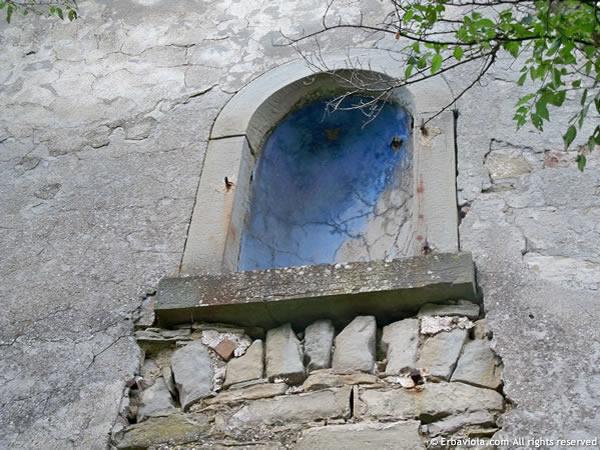 Nicchia sopra porta Castiglioncello - erbaviola.com