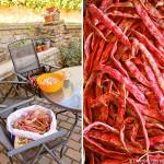 fagioli borlotti orto 2013 erbaviola.com