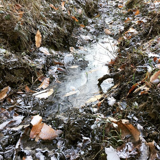 ghiaccio nel bosco 2017