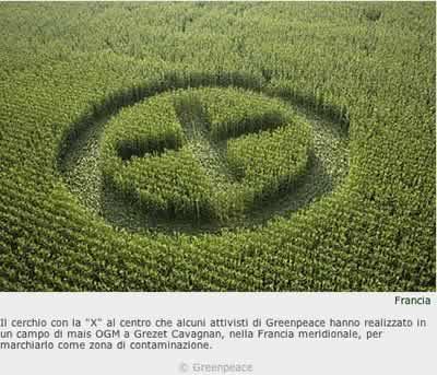 greenpeace_ogm.jpg