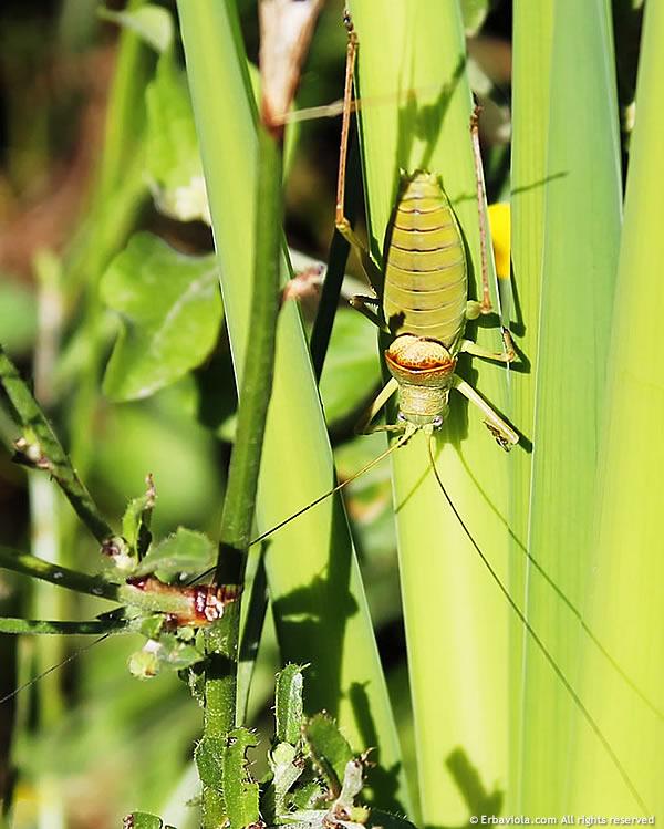 insetti monte bibele - erbaviola.com