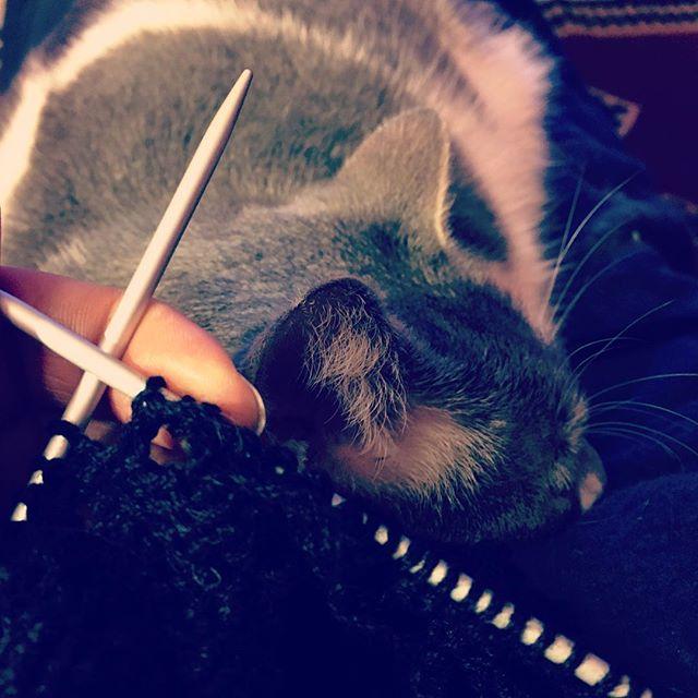 lavorando a maglia con in braccio Koi, davanti a un film: il contrario della mindfulness