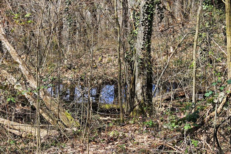 un temporaneo laghetto