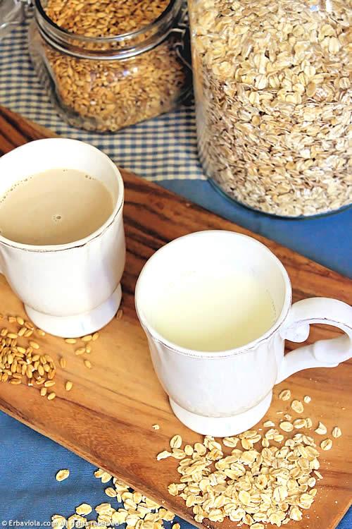 latte di orzo e latte di avena erbaviola.com