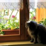Mako alla finestra con le sue tendite crochet