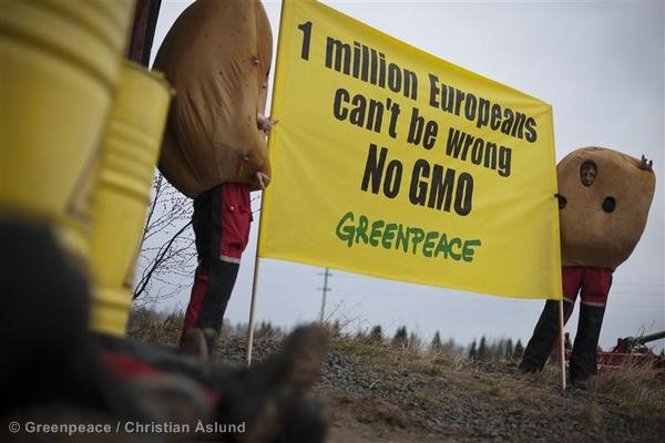 Greenpeace blockade GMO storage facility in northern Sweden Aktivister blockerar GMO-lager i Norrbotten