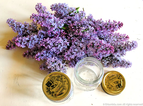 Oleolito di lillà - preparazione dei fiori