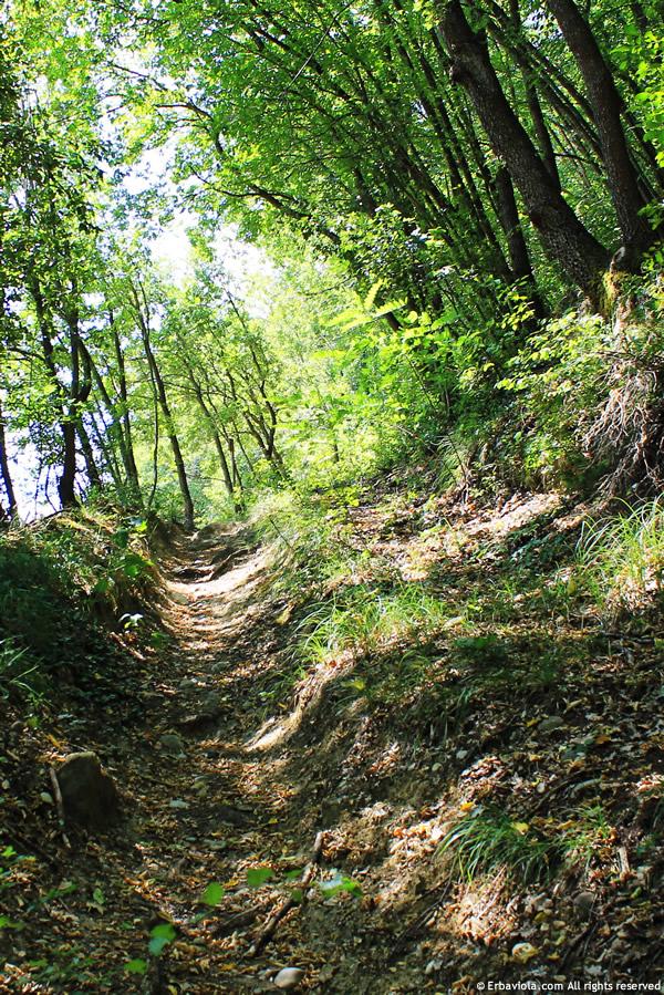 passeggiata nel bosco autunnale - erbaviola.com