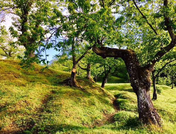 passeggiata nel castagneto: mindfulness del cammino