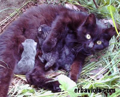 La gatta Minù con i cuccioli appena nati