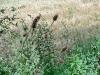 gruppo di erbe spontanee... direi i diserbanti non ci sono