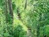 piccolo torrente nel bosco