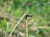 piccolo insetto non identificato