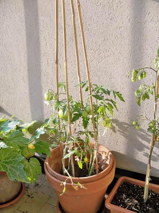 Orto sul balcone grazia cacciola - Lotta alle talpe in giardino ...