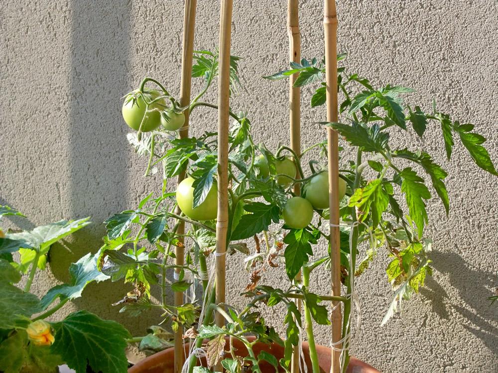 Mini Giardino Sul Balcone : Sul balcone o sul terrazzo ninfee e acquatiche con un tocco glam