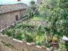 San Gimignano, orti sul terrazzo di una casa del XIII sec.