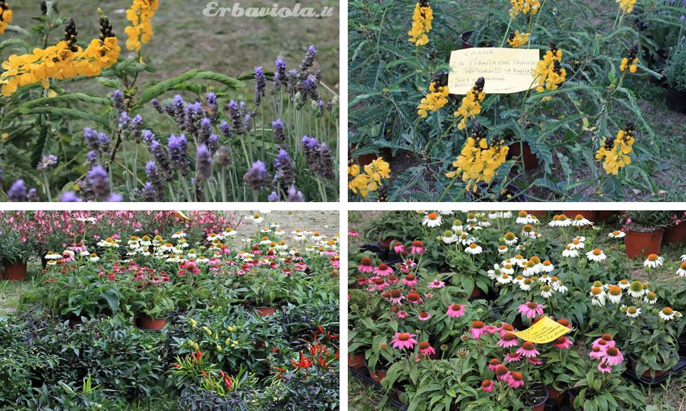 Fiori insoliti e erbe aromatiche - Giardino Jacquard, Schio