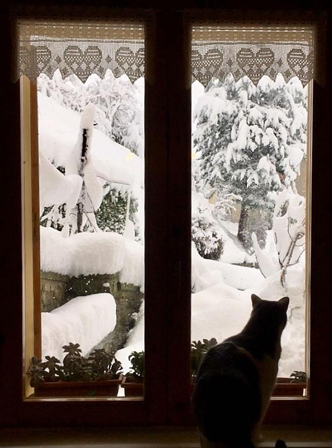 Koi alla finestra osserva la neve