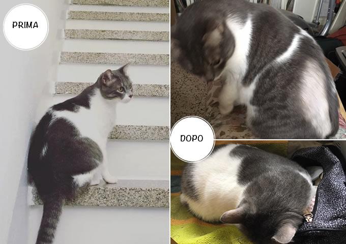 Gatti prima e dopo