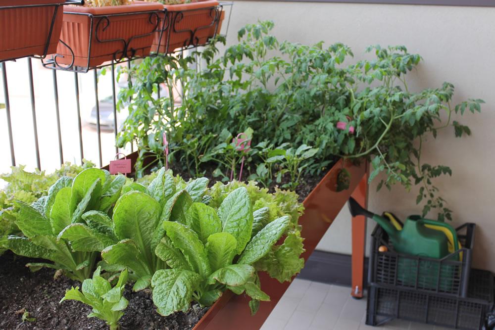 orto sul balcone - tavolo da orto - erbaviola