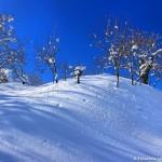 neve nel castagneto