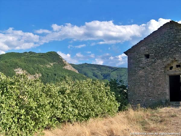 Castiglioncello, panorama - erbaviola.com