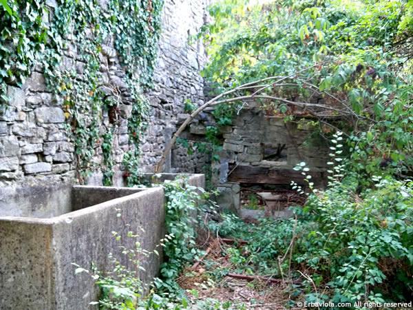 Lavatoi in pietra e forno a legna esterno a Castiglioncello - erbaviola.com