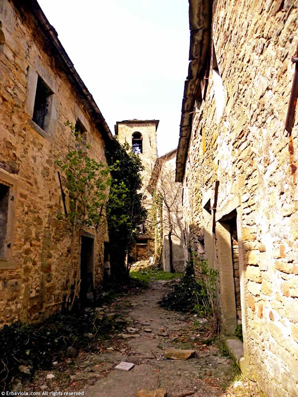 Strada tra le case a Castiglioncello di Moranduccio - erbaviola.com