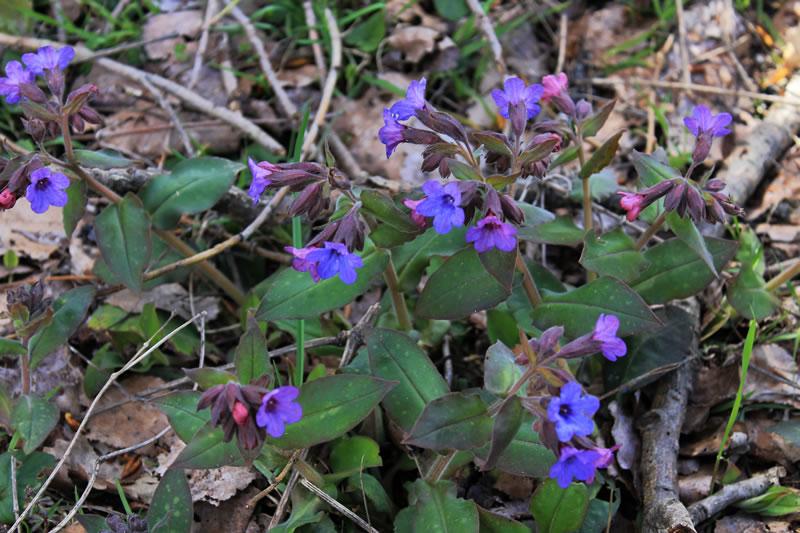 fiori nel sottobosco