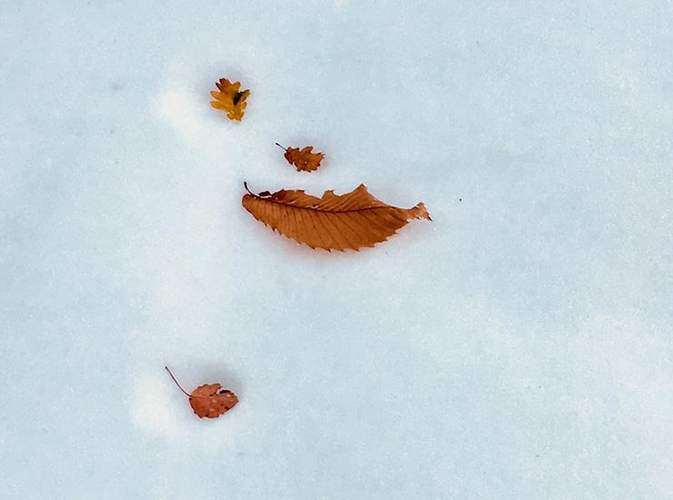 foglie sulla neve