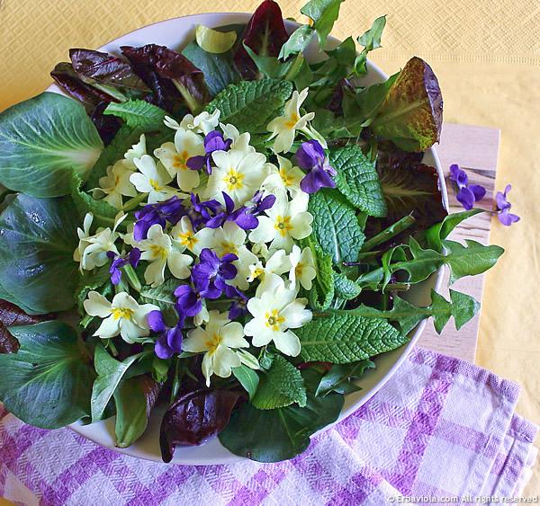 Le primule e le viole, sia fiori che foglie, in insalata