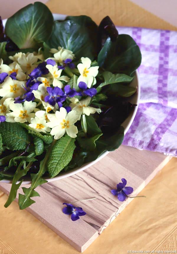 Insalata di viole, primule e cicorini selvatici