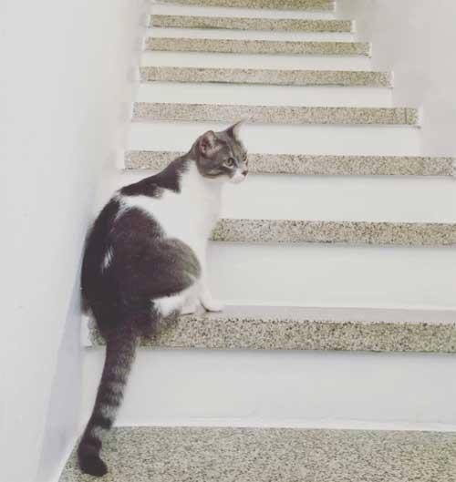 Lavorare da casa: koi sulle scale dello studio