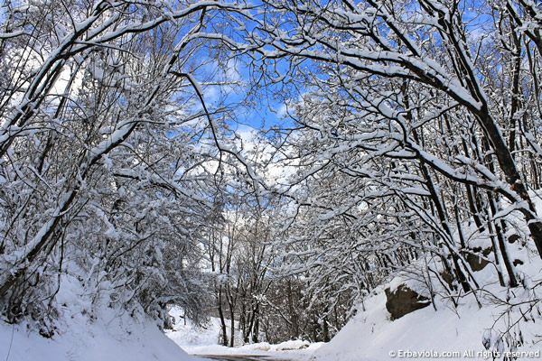 Nevica! La strada per arrivare a casa, attraverso il bosco innevato